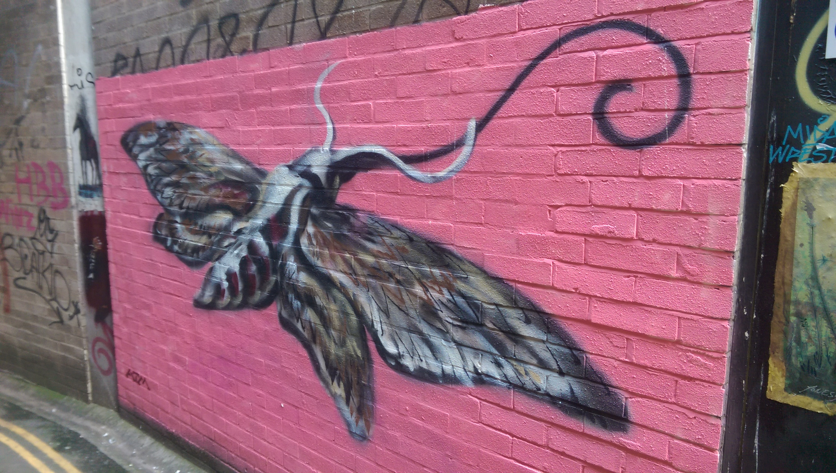 Hawk Moth in Leonard Lane, Bristol.